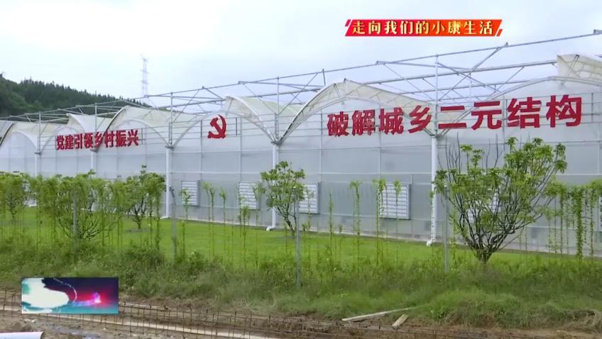 广东英德加快连樟样板区建设 7199户农户实现就业和增收