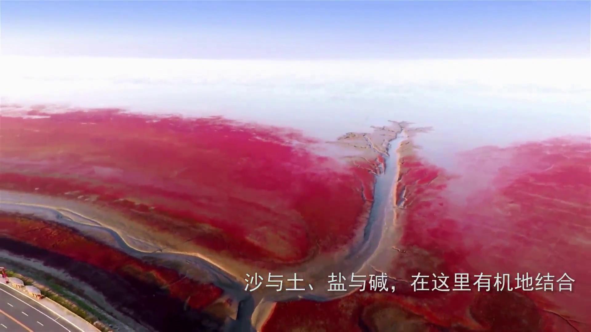 《生态中国·十期十美》辽宁篇·天辽地宁红滩舞