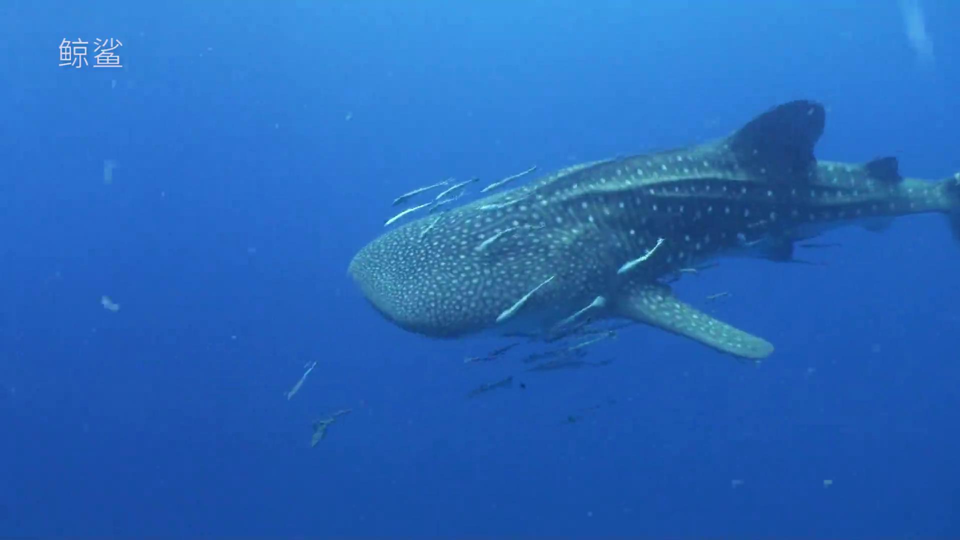 自然资源部在世界海洋日呼吁:珍惜海洋资源 保护海洋生物多样性
