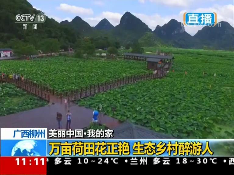 【美丽中国·我的家】广西柳州:万亩荷田花正艳 生态乡村醉游人