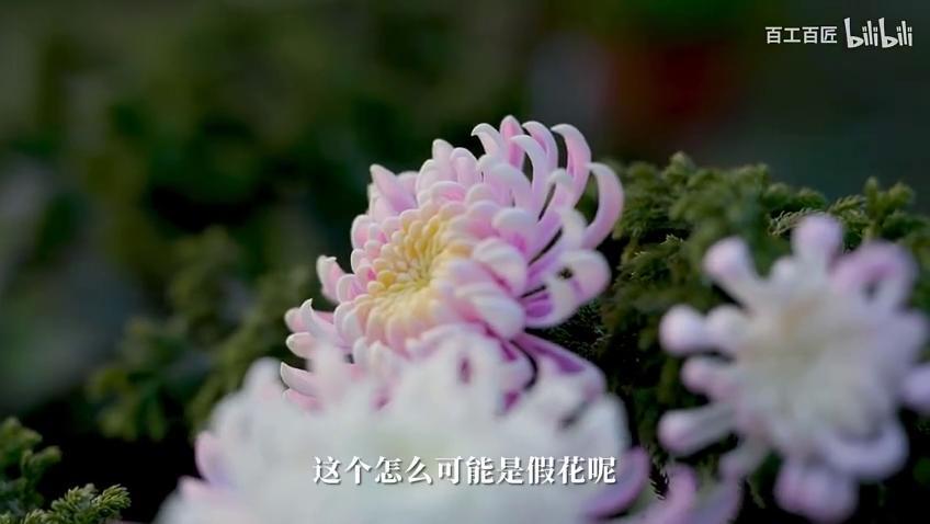 永不凋谢的通草花:扬州市市级非物质文化遗产扬州通草花制作技艺